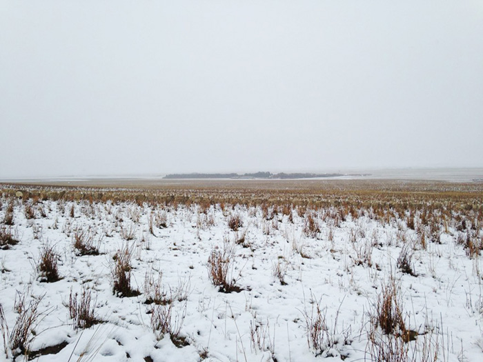 Ezen a képen félezer juh bújt el, megtalálod őket?