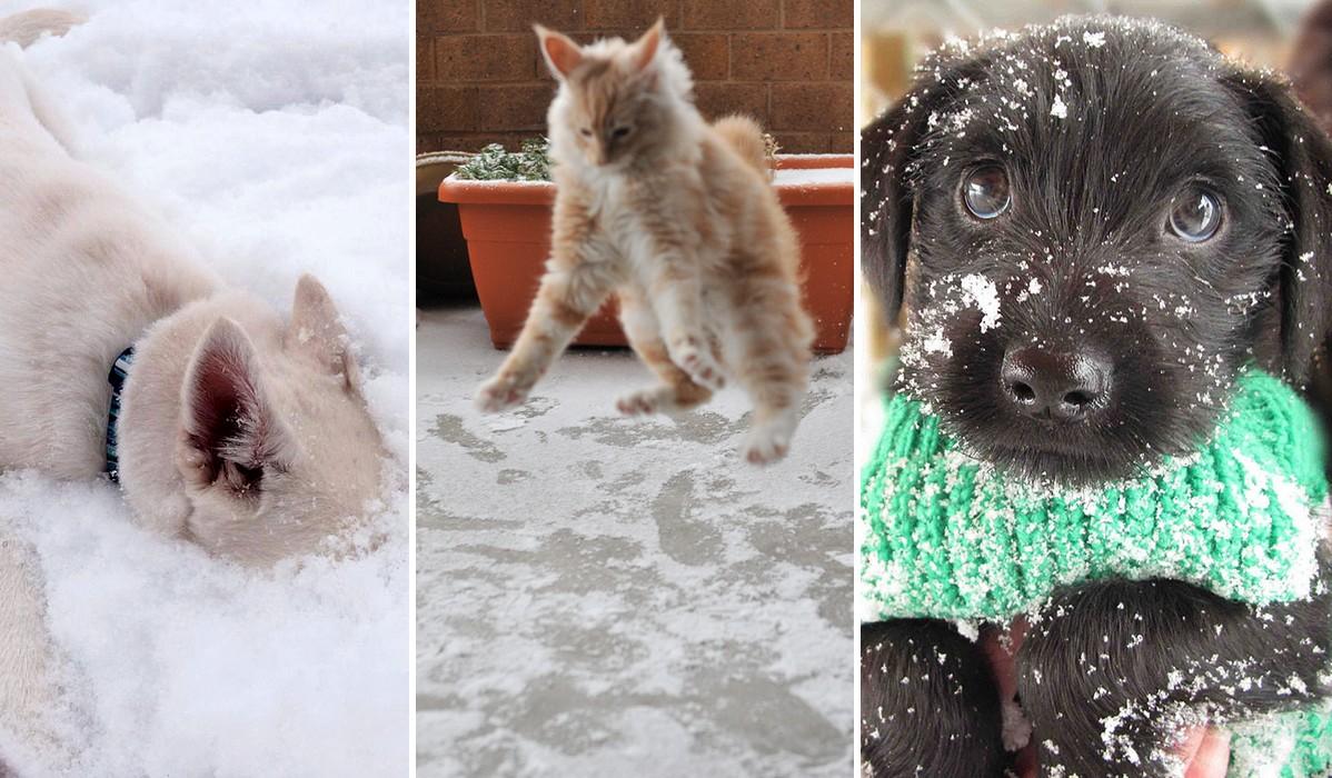 Ezek az aranyos állatok életükben először találkoztak hóval – Nézd meg a reakciójukat!