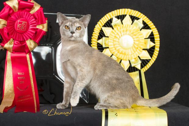 Magyar cica lett a világ legszebbje