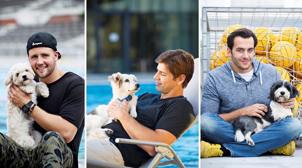 Gazdira váró kutyusokért kampányolnak a magyar vízilabdások
