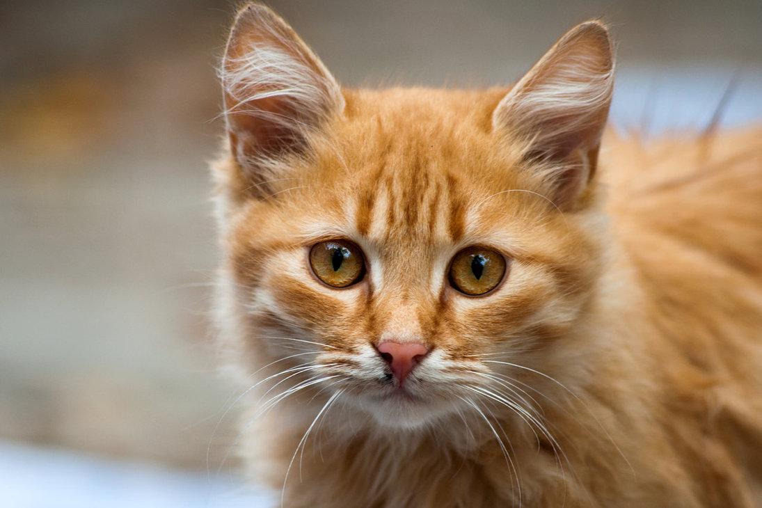 Kitelepítené a kóbor macskákat Izraelből a mezőgazdasági miniszter