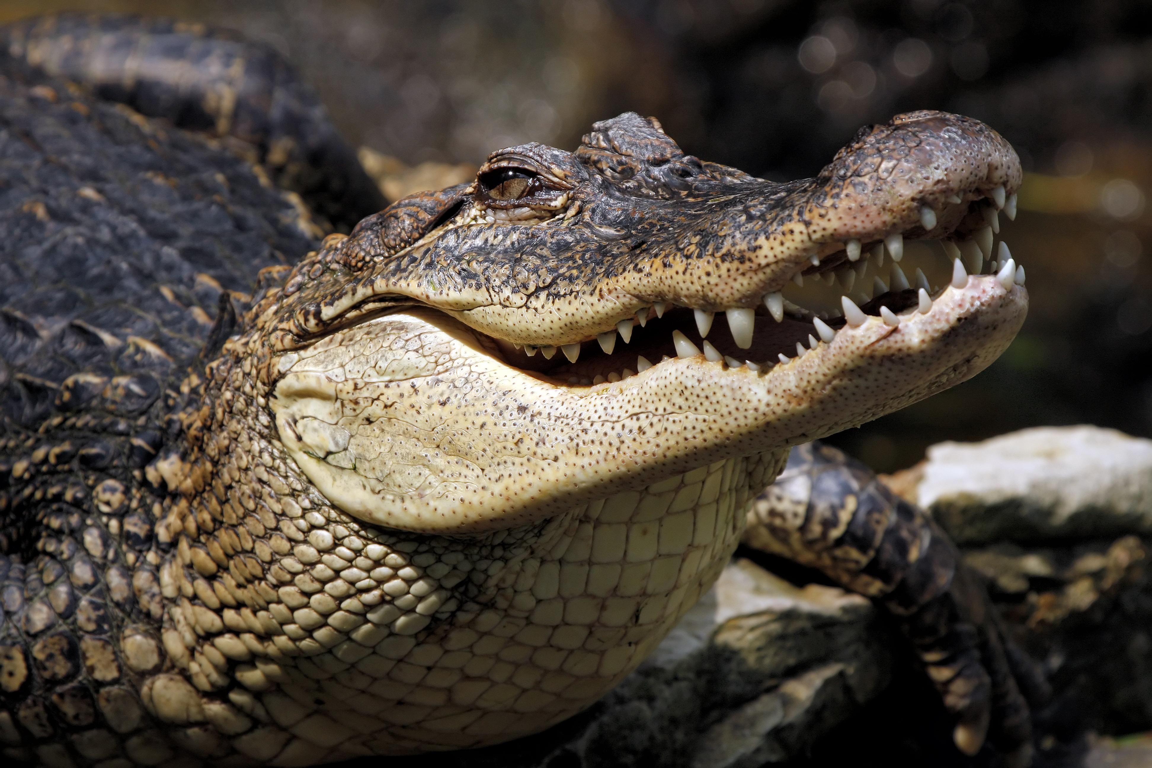 Szökött krokodilt fogtak Ciszjordániában