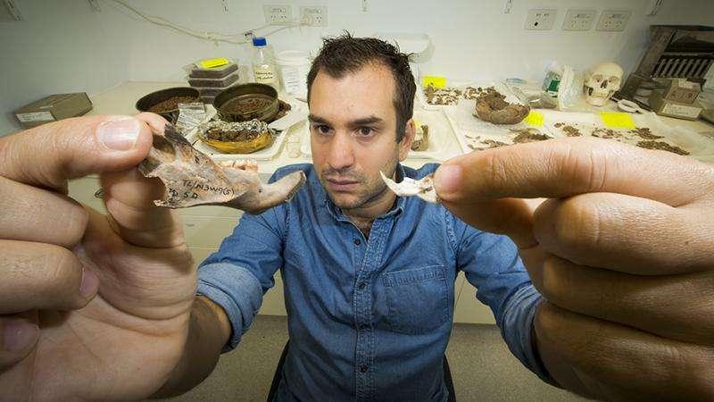 Kutyaméretű őspatkányok maradványait fedezték fel ausztrál kutatók