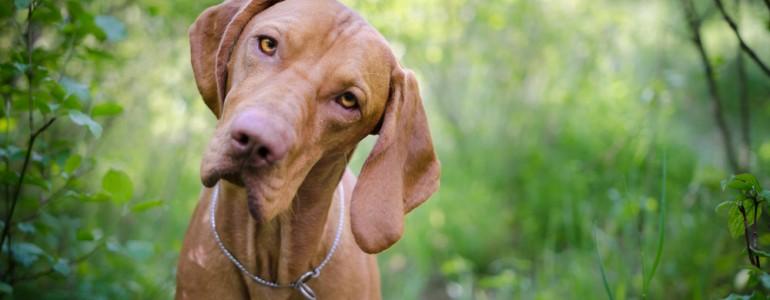 Asszertív kommunikáció alkalmazása a kutya nevelésében