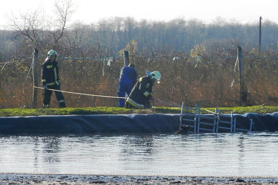 11 vaddisznót mentettek meg a tűzoltók Borotán