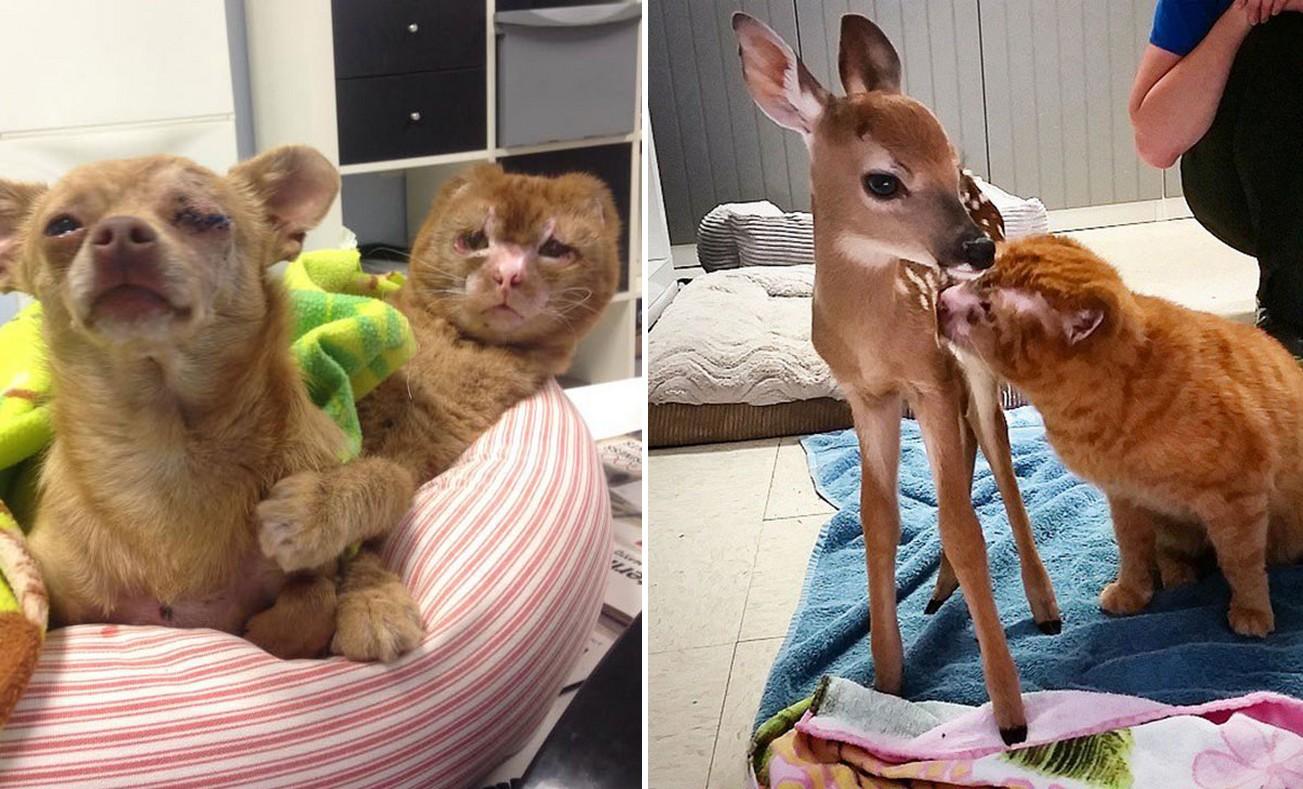 Beteg állatoknak nyújt vigaszt a tűzvészben megsérült cica
