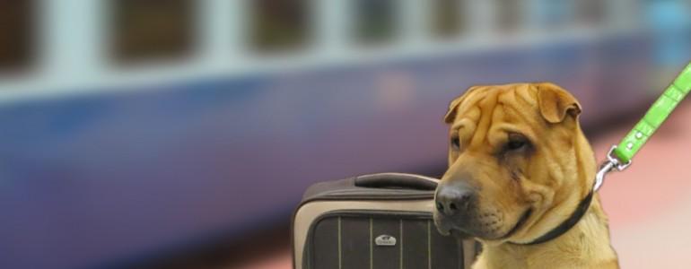 Petíciót indítottak, hogy megkönnyítsék a kutyákkal való vonatozást