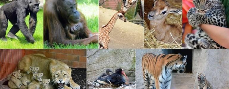 Veszélyeztetett állatok Budapesten