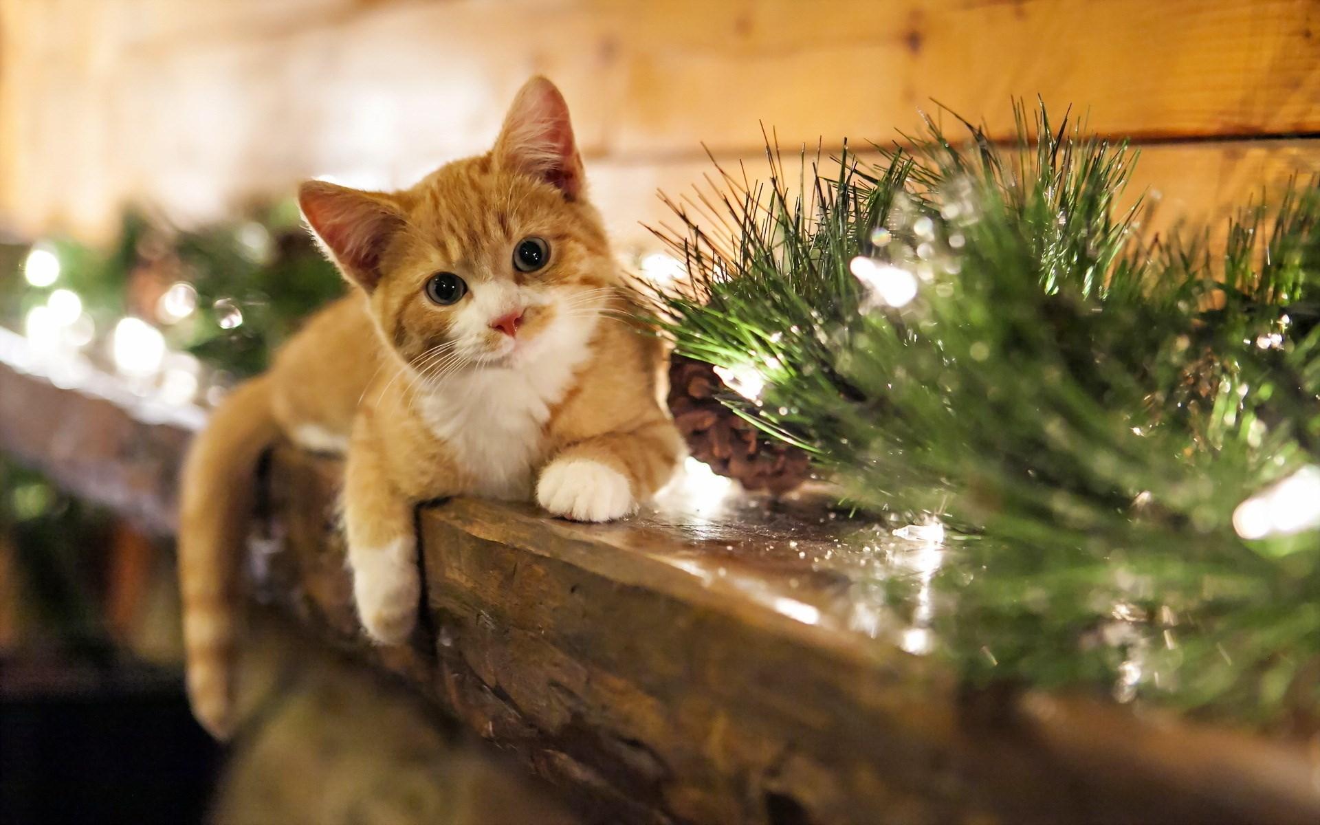 Házi kedvenc karácsonyra? Itt az ideje az előkészületeknek!