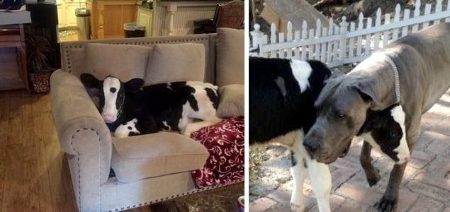 A boci története, aki kutyának képzeli magát