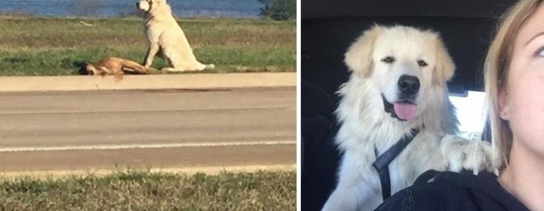 Napokig őrizte elpusztult társát ez a hűséges kutyus