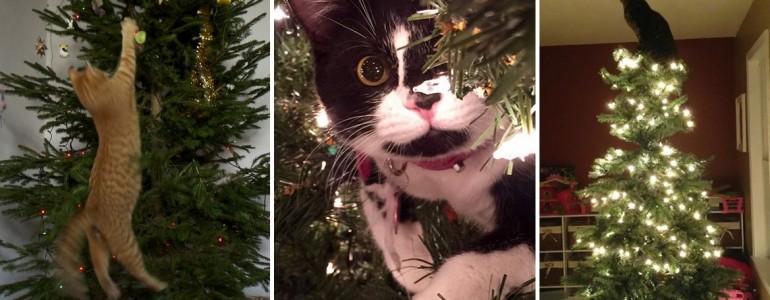 26 cica, aki készségesen segít a karácsonyfa díszítésben