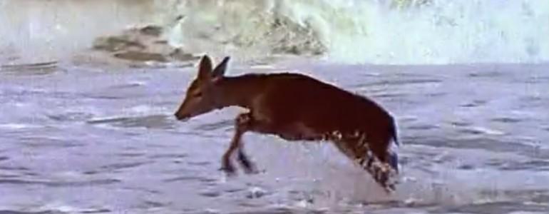 Megbabonázta az óceán látványa a szarvast