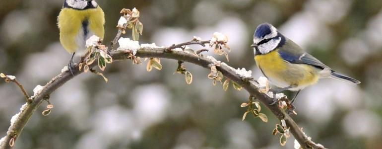 Kezdetét vette az országos madáretetési szezon, íme a tudnivalók
