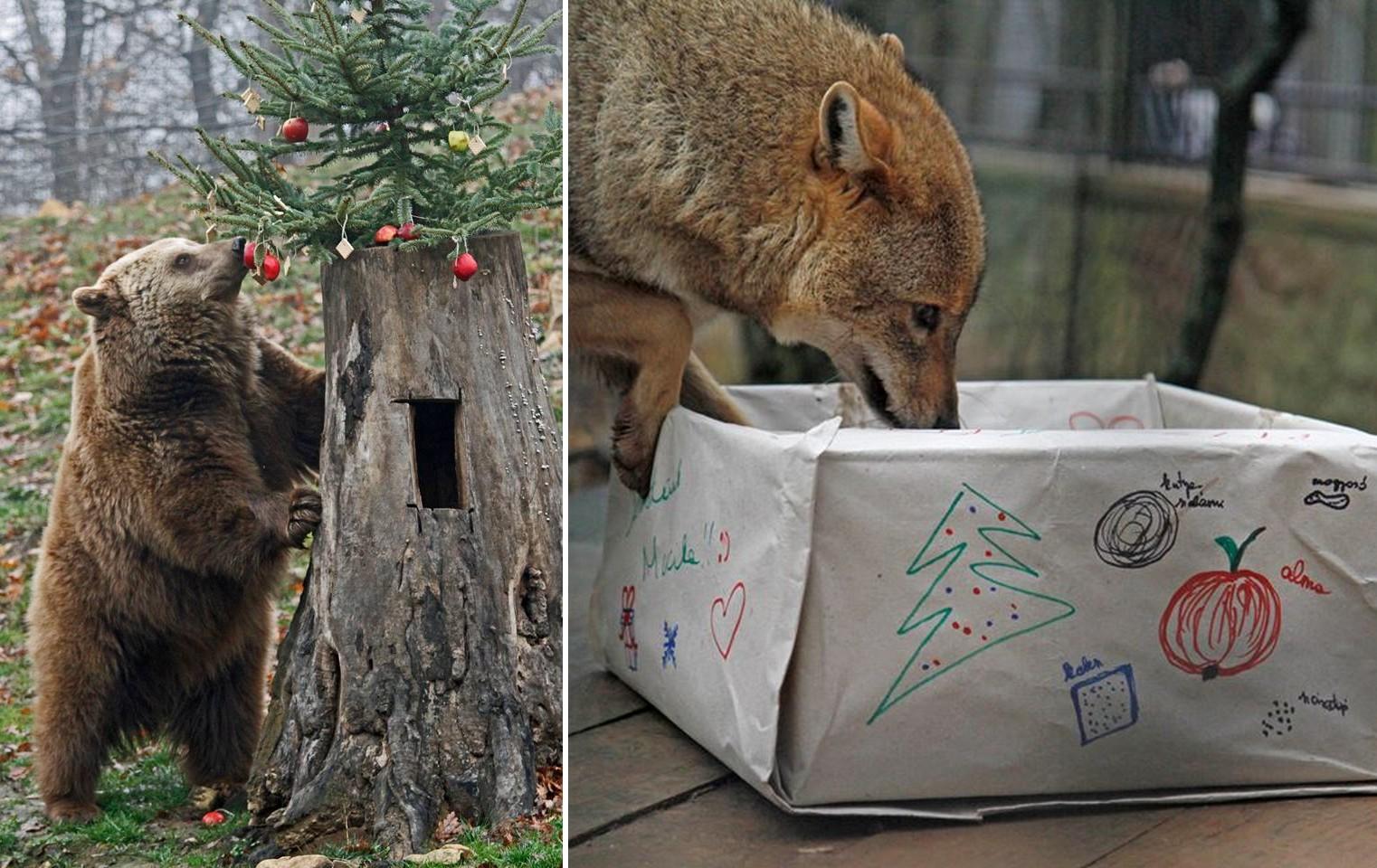 Karácsonyi ajándékot kaptak a Budakeszi Vadaspark lakói