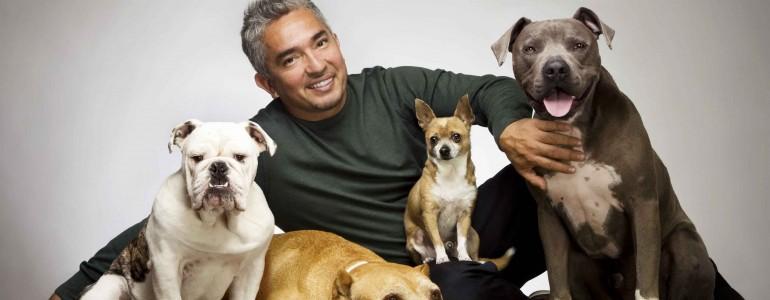 Magyarországon is fellép Cesar Millan, a csodálatos kutyadoki