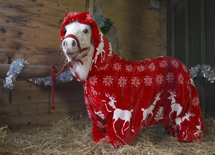 Fogadjunk, hogy ez a póni lesz a legstílusosabb idén karácsonykor