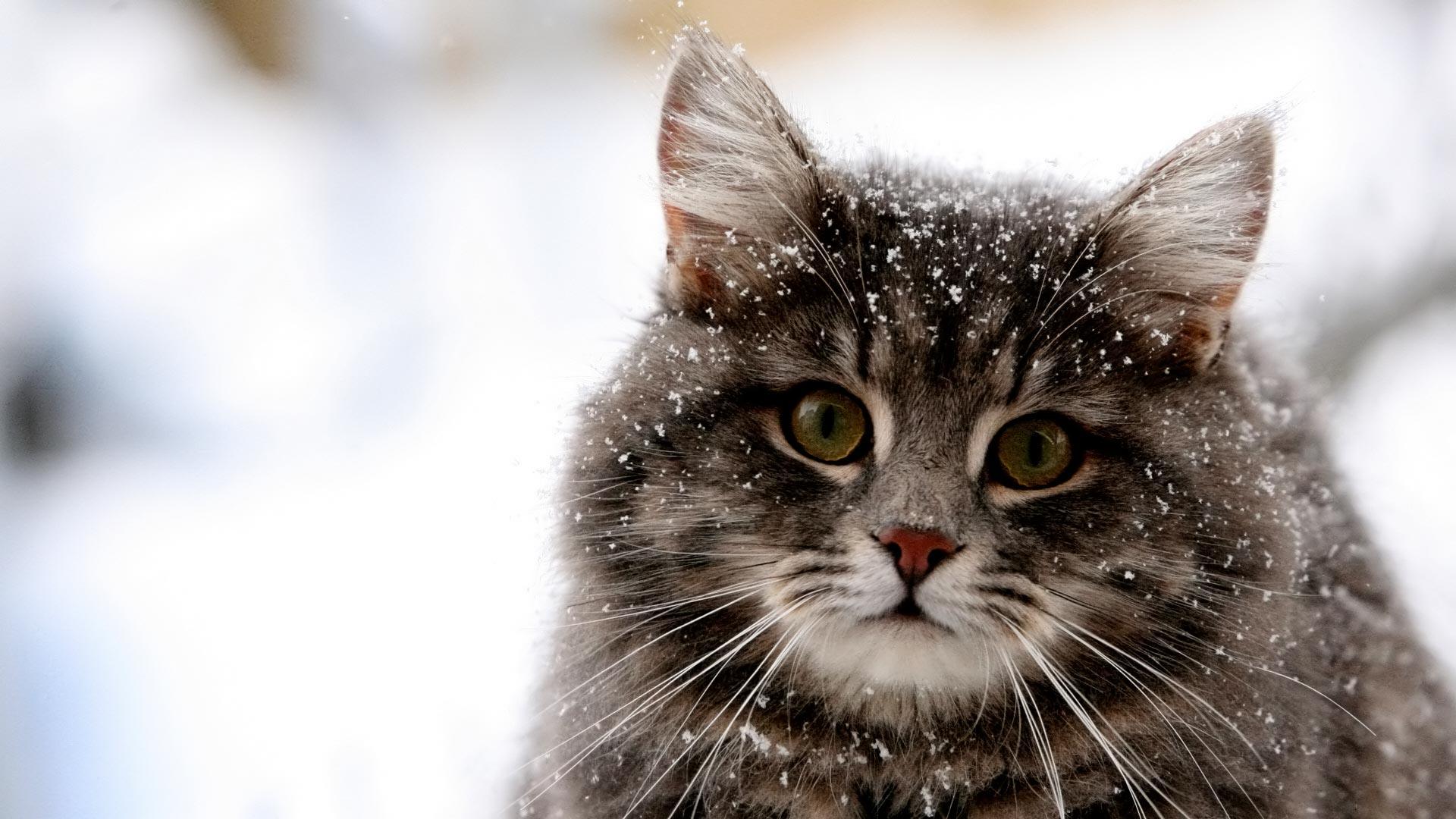 3 apróság, amivel segíthetünk a kóbor macskáknak a téli hidegben