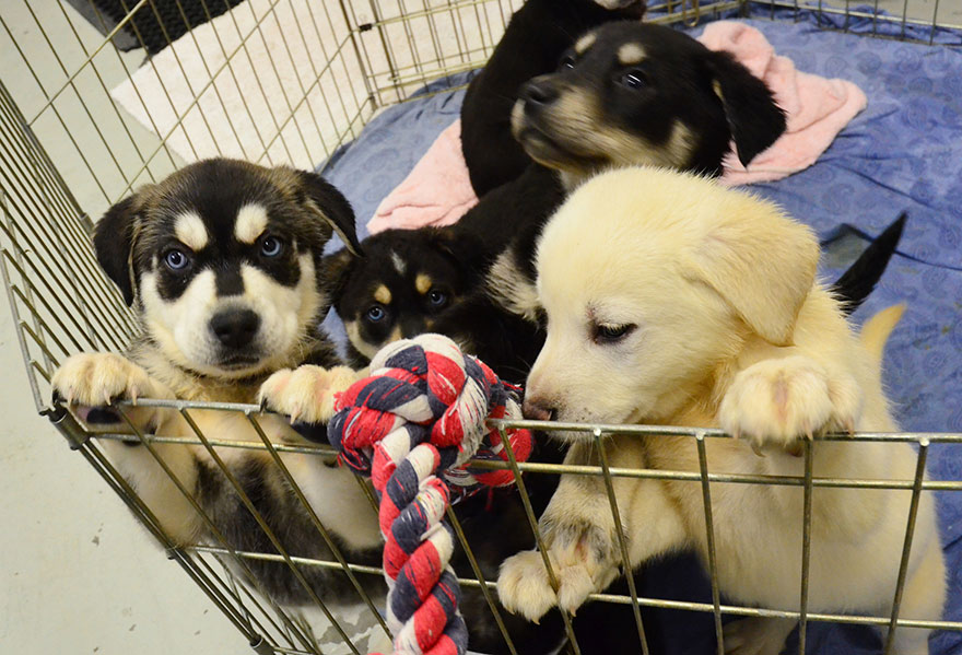 Kutyaszobát alakítottak ki egy brit egyetemen a stresszes tanulóknak