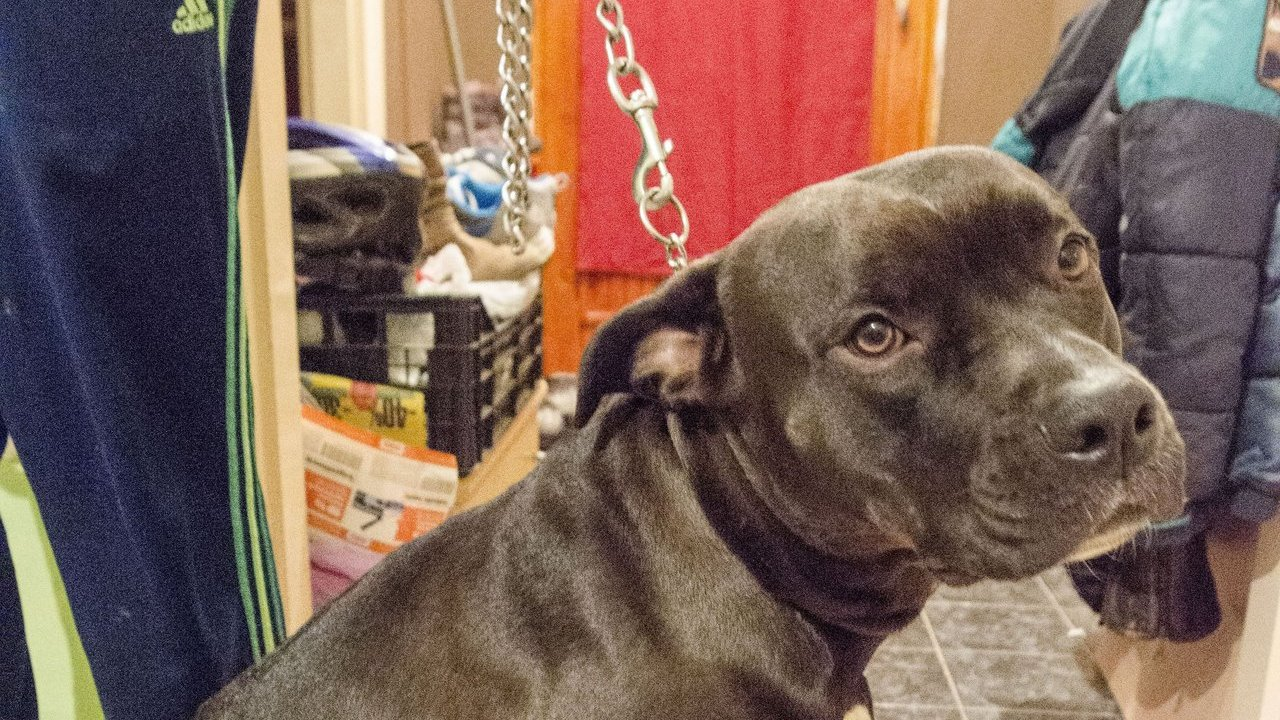 Filmbe illő akcióval fogták meg a kutyatolvajokat Hódmezővásárhelyen