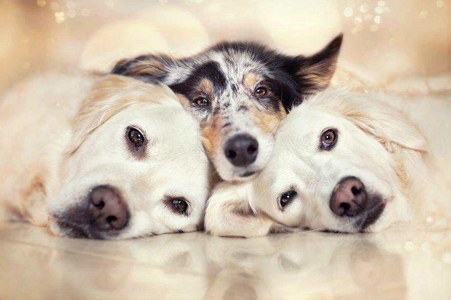 A legédesebb kutyabarátságok egyetlen mesés fotósorozaton