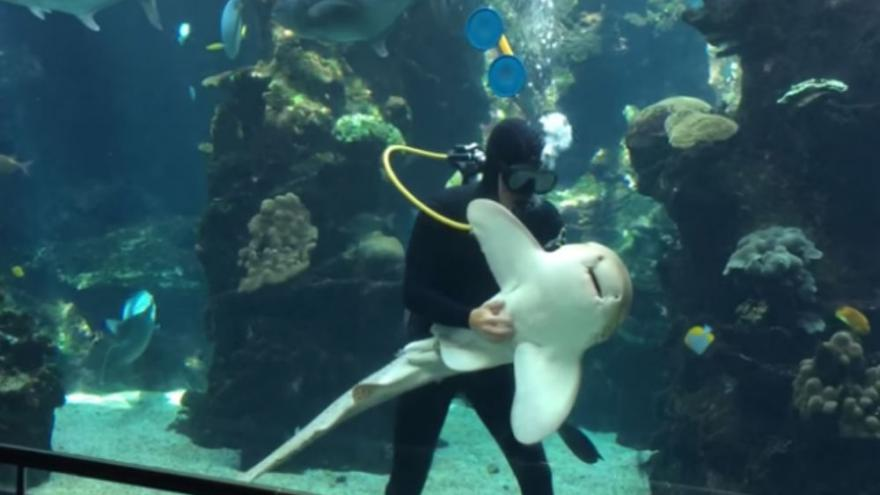 Itt a bizonyíték, hogy a cápák is élvezhetik a hasvakargatást