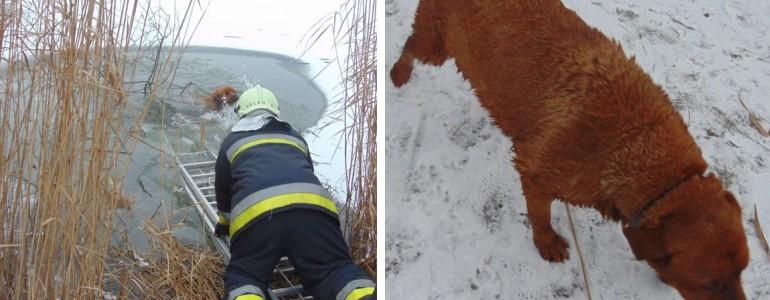 A jeges Velencei-tóból mentettek ki egy kutyát a tűzoltók