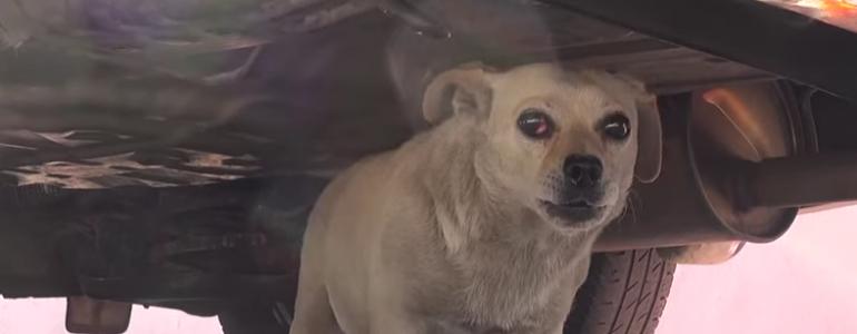 Hónapokig élt az utcán a reszkető és beteges kutyus – ma már rá sem lehet ismerni