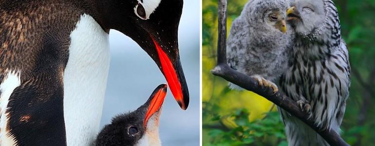 25 lenyűgöző fotó fiókáikról gondoskodó madarakról