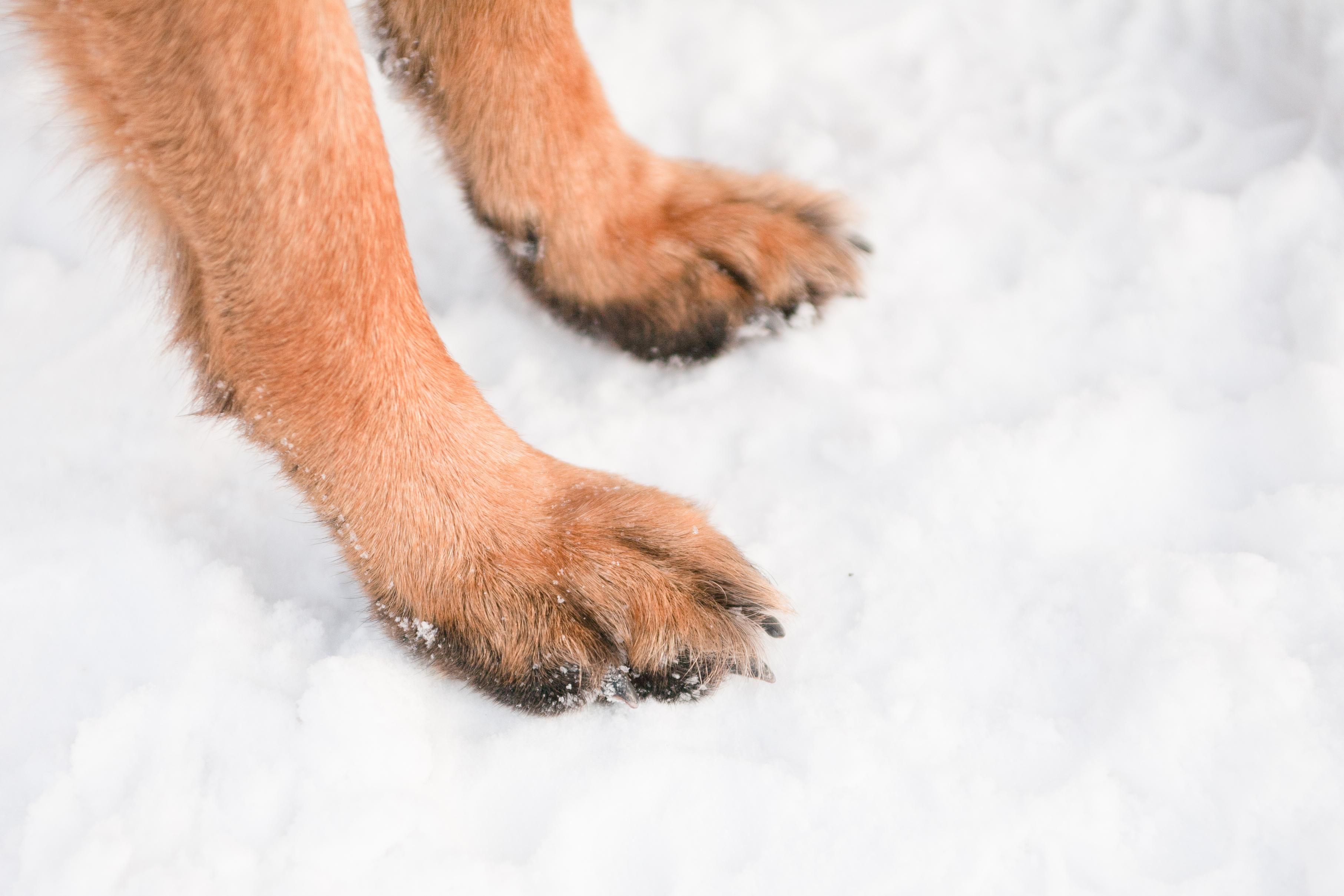 A kutyák legnagyobb ellensége télen: a felsózott járdák – Így védekezhetsz ellene!