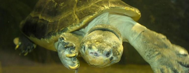 Különleges teknősfajjal gazdagodott a Nyíregyházi Állatpark