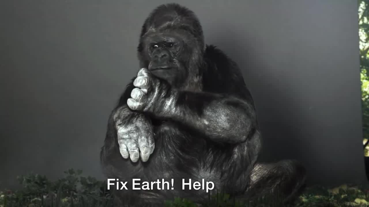 Jelnyelvvel üzent az emberiségnek Koko, a világ leghíresebb gorillája
