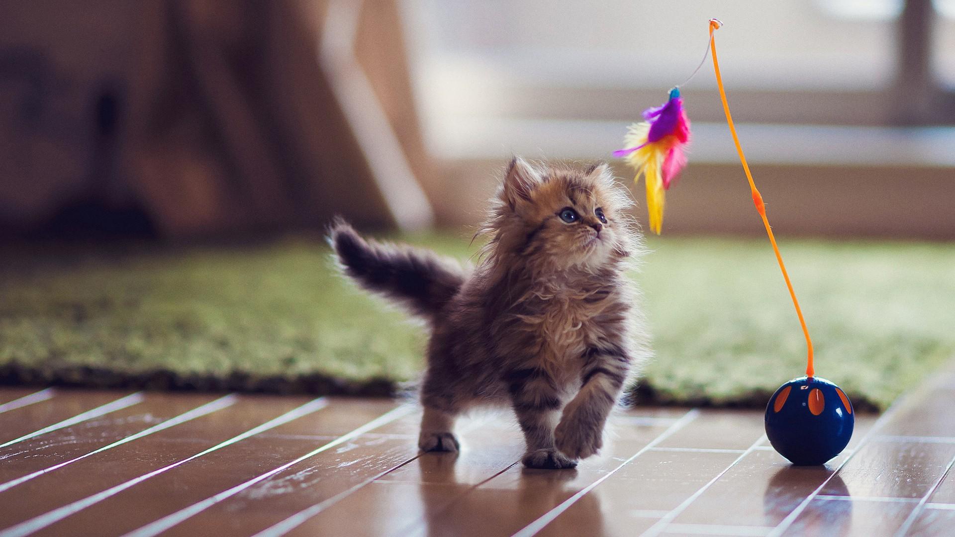 Hogyan játsszunk a macskánkkal?