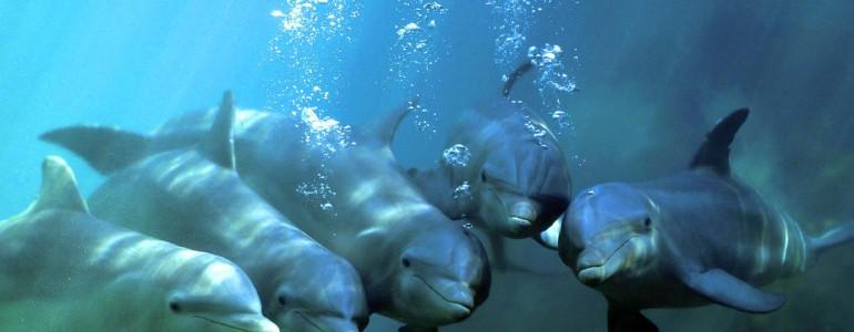Egy betiltott vegyület maradványai még mindig veszélyeztetik az európai cetféléket