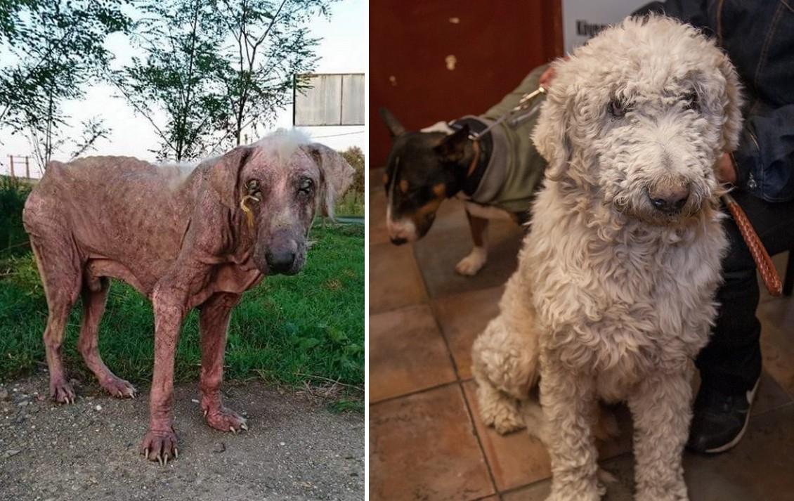 Újjászületett Pucér Bubu, a kutya, akinek nem volt jövője