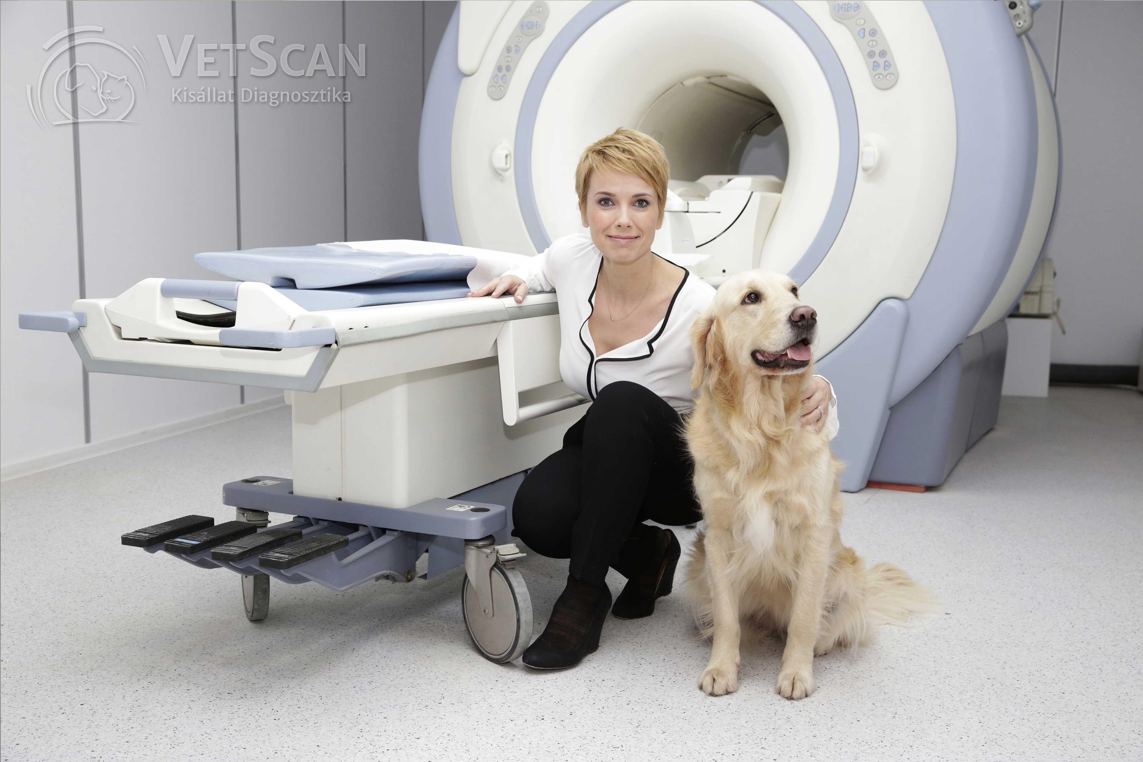 Mérföldkő az állatgyógyászatban: mától MR-vizsgálatot is kérhetsz kedvencednek