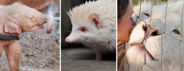 31 természeti csoda – hihetetlen fotók albínó állatokról