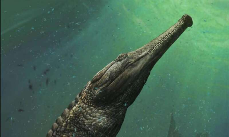 A valaha élt legnagyobb krokodil koponyájára bukkantak Tunéziában