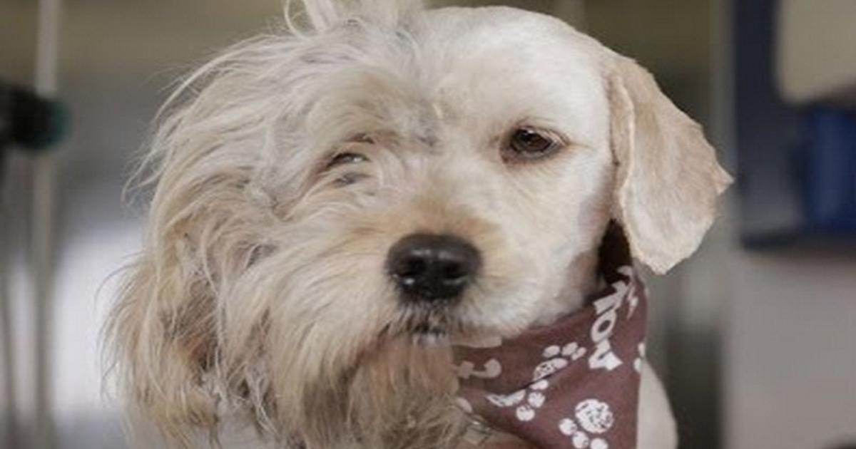 Megható videó egy kóbor kutya hihetetlen átváltozásáról