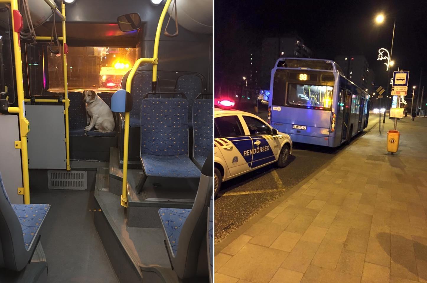 BKV-buszra szállt a petárdáktól megriadt kutyus