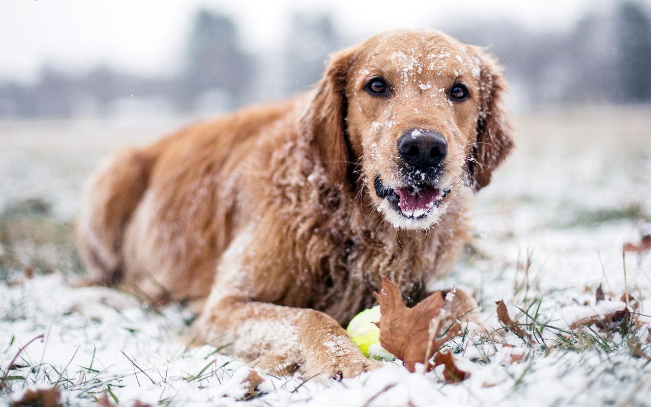 Kutyatartás télen – Így vigyázz kedvencedre a hidegben!