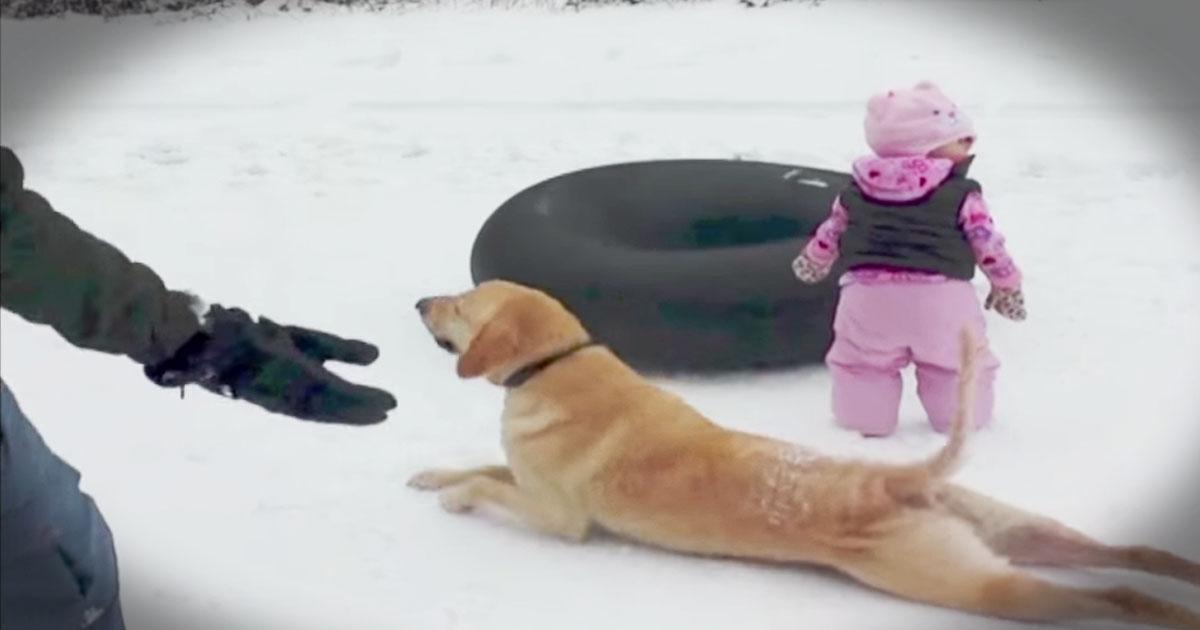 A lehető legaranyosabb módon zavarta meg a felvételt ez a kutyus