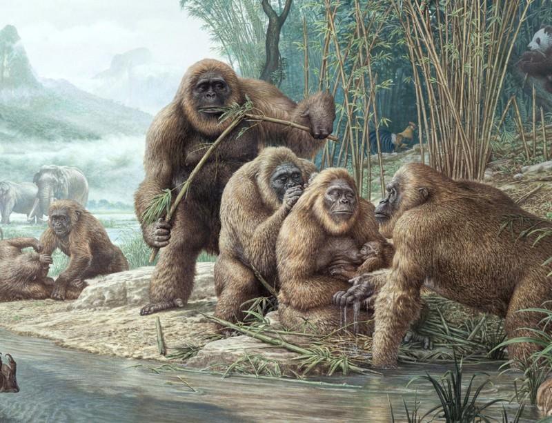Gigantikus mérete miatt pusztult ki a valaha élt legnagyobb majom