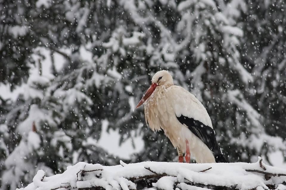 Tizedik telét tölti nálunk Fülöp, a hűséges gólya