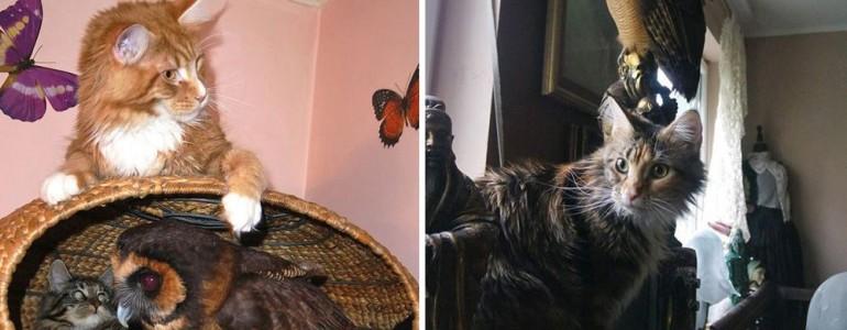 Állati sztori: Macskaként éli mindennapjait Sophie, a maláj erdei bagoly