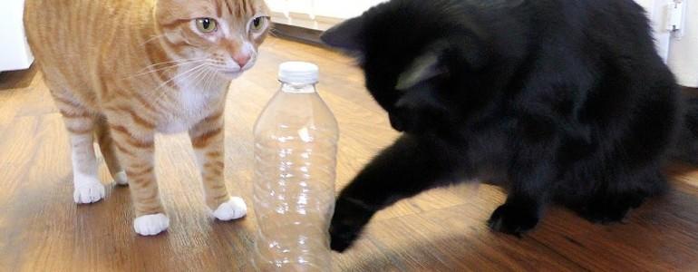 5 okos ötlet, amit minden macskás gazdinak ismernie kell