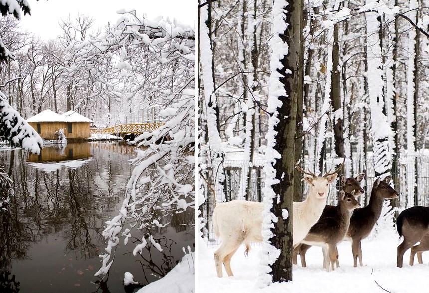 Mesebeli tájjá változott a hóval betakart Nyíregyházi Állatpark