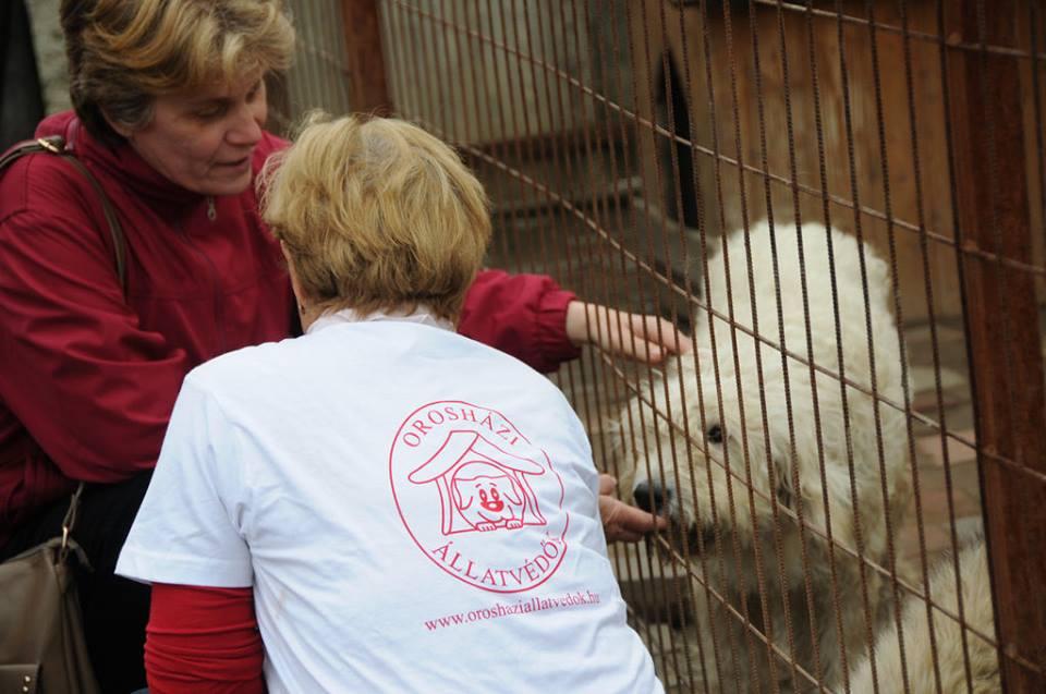 A munkáját is feladta Ilona, hogy életét az állatok megmentésének szentelje