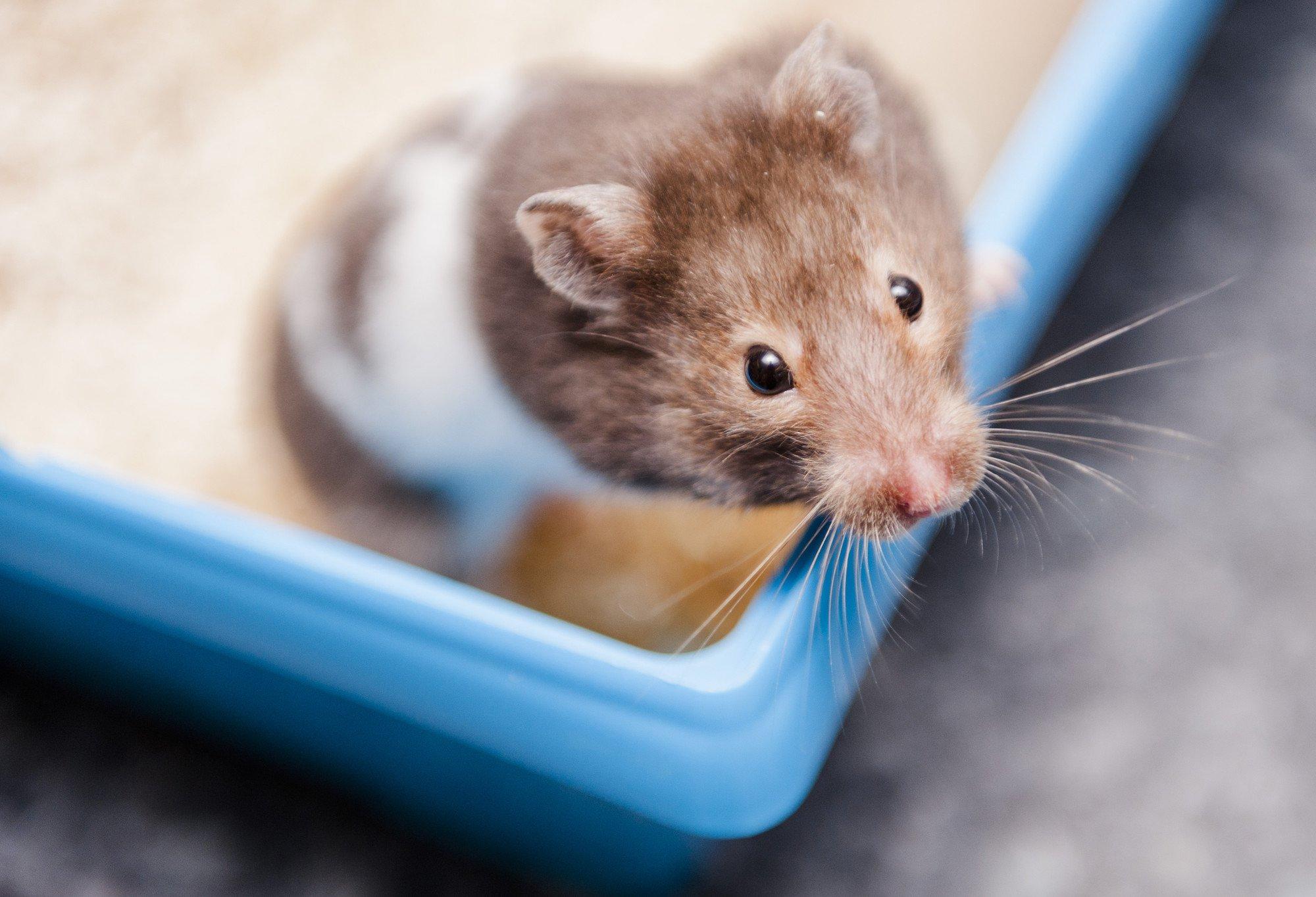 A nagyobb agyméret a kihalás nagyobb kockázatával jár az emlős állatoknál