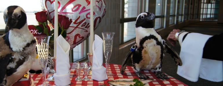 A 22. Valentin-napjukat ünnepelte idén ez a két imádnivaló pingvin
